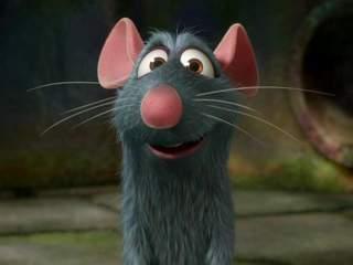 Quand le copropriétaire lutte contre les rats!