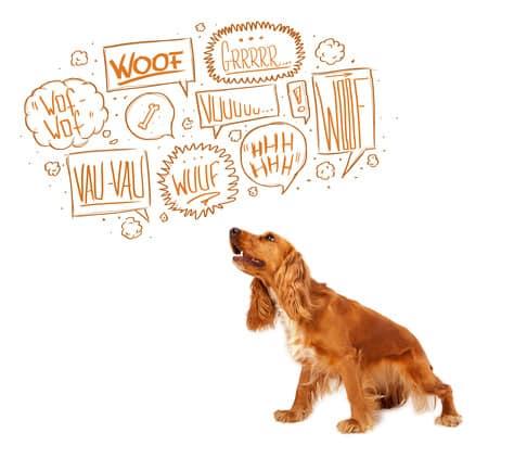 Quand il y a un chien dans un logement!