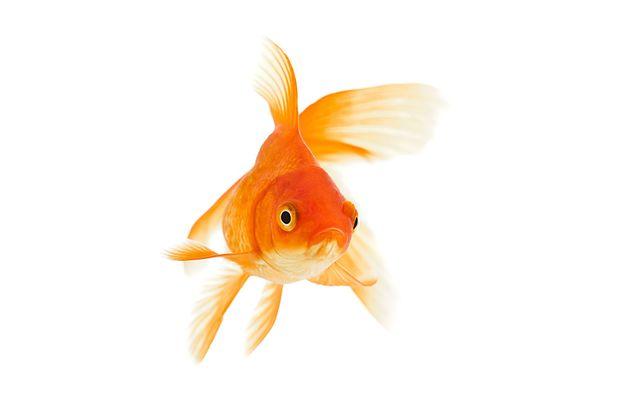 Quand le copropriétaire fait un poisson à son syndic ou pas…